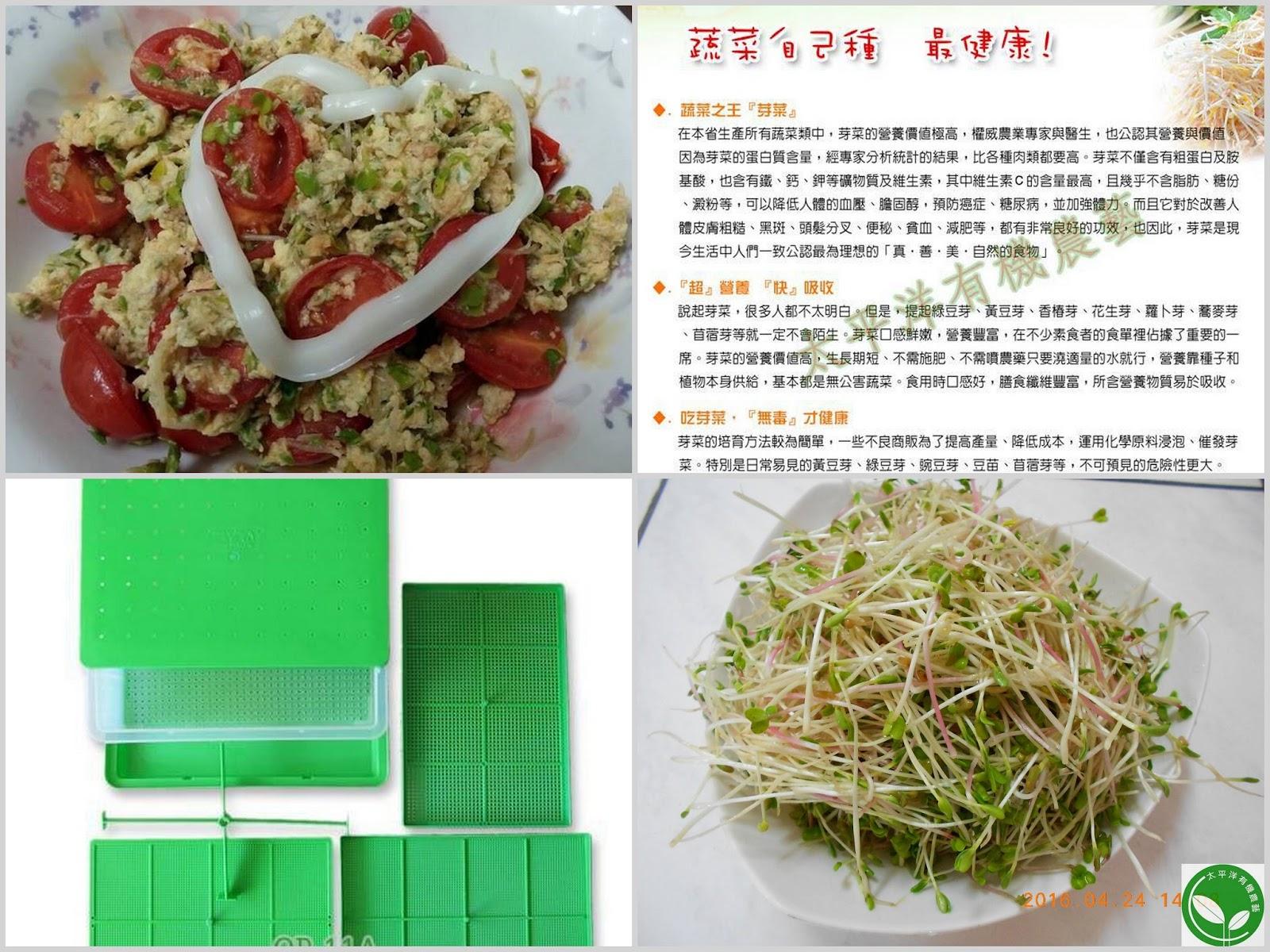 蘿蔔,蘿蔔籽,蘿蔔嬰料理,葉蘿蔔料理,蘿蔔籽茶,蘿蔔嬰,紫蘿蔔,葉蘿蔔食譜,蘿蔔種植方法,蘿蔔子功效