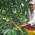 Requieren con urgencia 35.000 recolectores de café en Huila