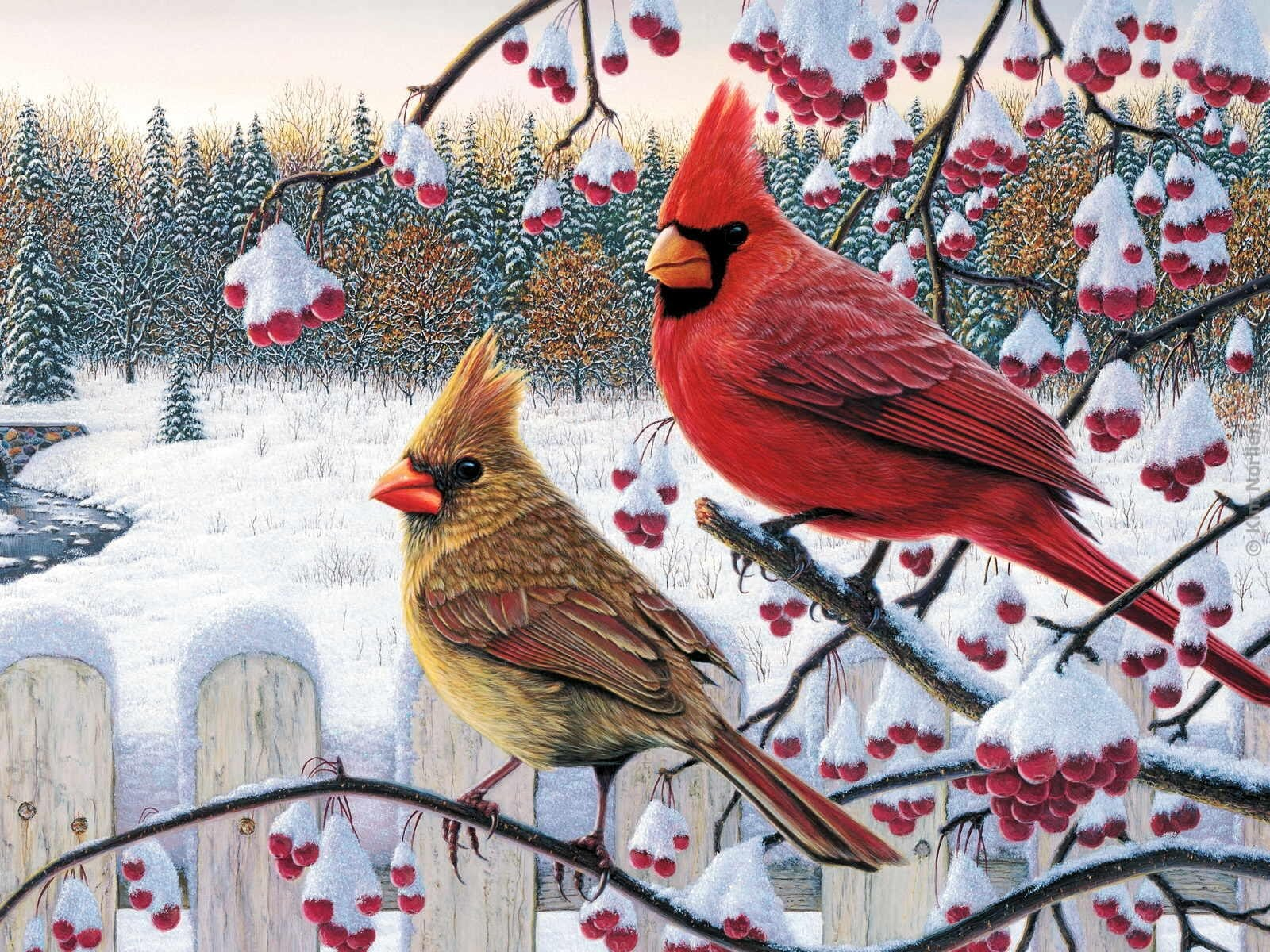 Winter bird images - photo#41