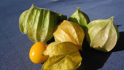 gooseberry fruit