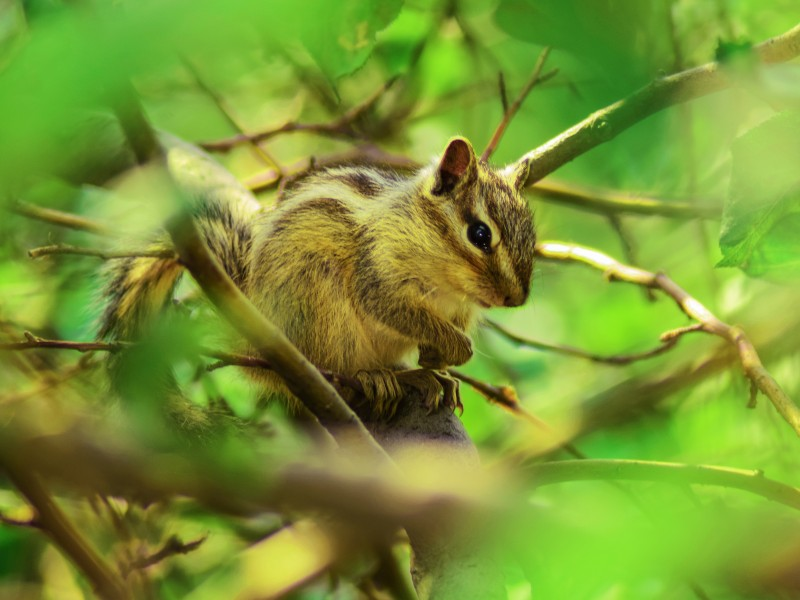 Download Brown Squirrel Perched on Tree Branch HD wallpaper. Click Visit page Button for More Images.