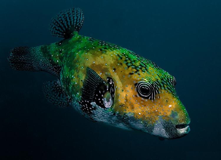 Beautiful Cute Babies Wallpapers Download Top 27 Sea Animals Wallpapers In Hd