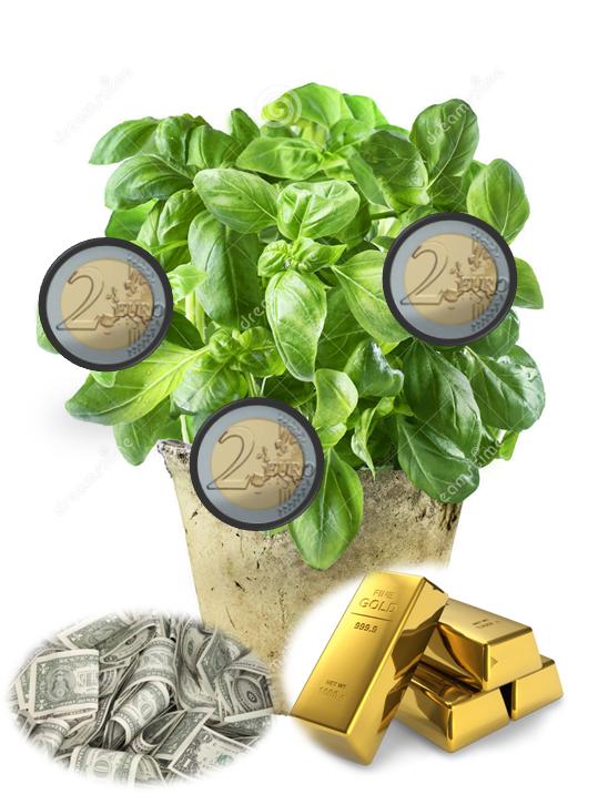 Oraciones para dinero y fortuna hechizo para atraer - Plantas para atraer el dinero ...