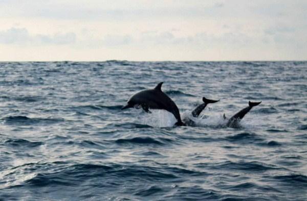 Lumba-lumba Ditemukan Mati di Daerah Konservasi Myanmar