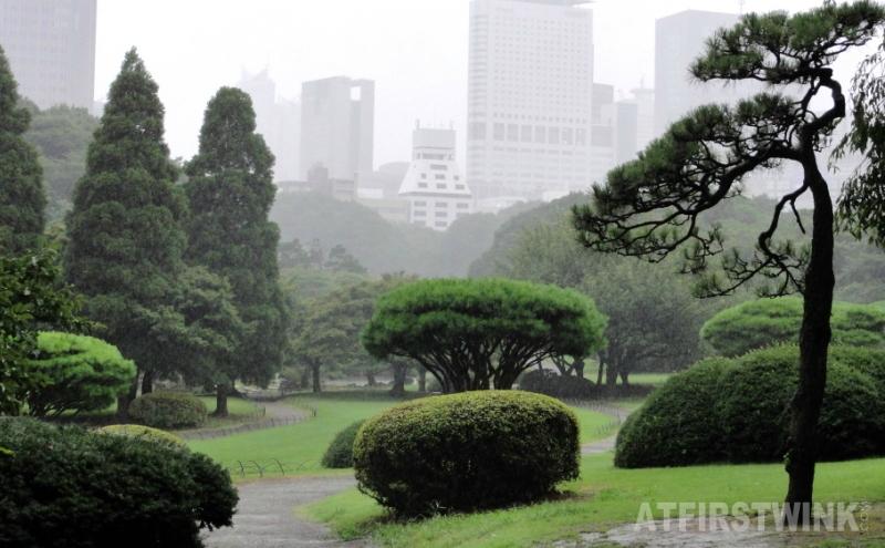 Shinjuku Gyoen 新宿御苑 trees