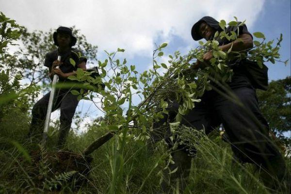Caquetá inicia plan de sustitución voluntaria de cultivos ilícitos