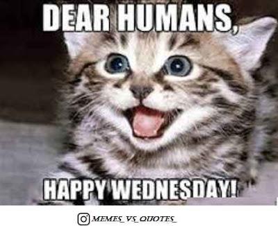 Dear human happy Wednesday