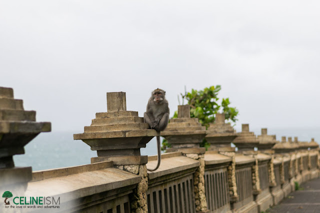 uluwatu monkeys