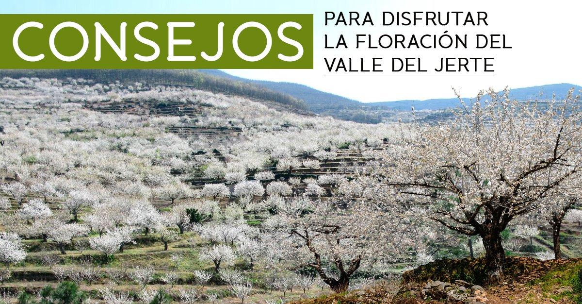 floracion valle del jerte
