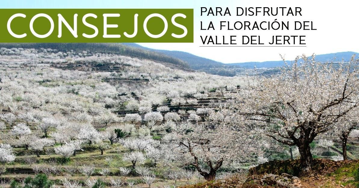 Cerezo en flor valle del jerte programa oficial for Oficina de turismo valle del jerte