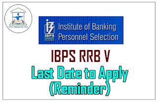 IBPS RRB V – Last Date to Apply (Reminder)