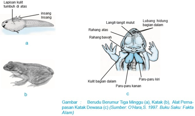 46 Gambar Sistem Pernapasan Hewan Mamalia Terbaru