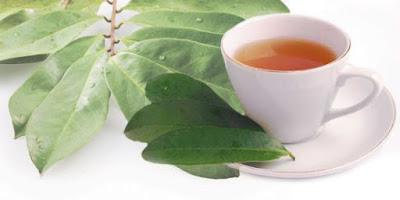 Khasiat Daun Salam Sebagai Obat Asam Urat Herbal Yang Jitu Tanpa Efek Samping