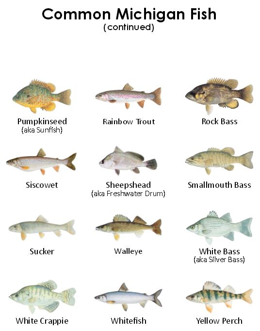 Eaton Rapids Joe: Eating wild-caught fish