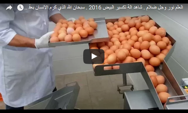 آلة تكسير البيض بطريقة مبتكرة