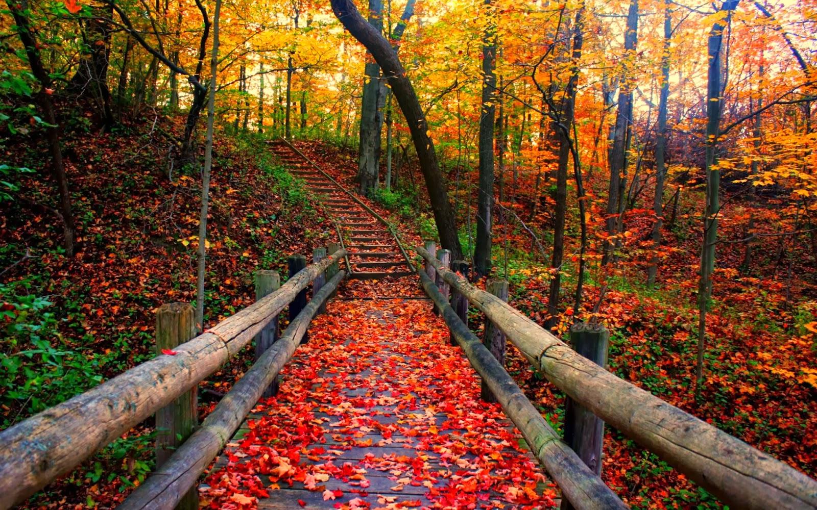 VintageVelvets...: Happy Autumn 2013