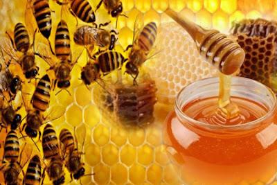 Image result for madu lebah