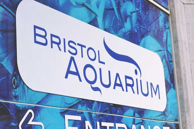 Bristol Aquarium review