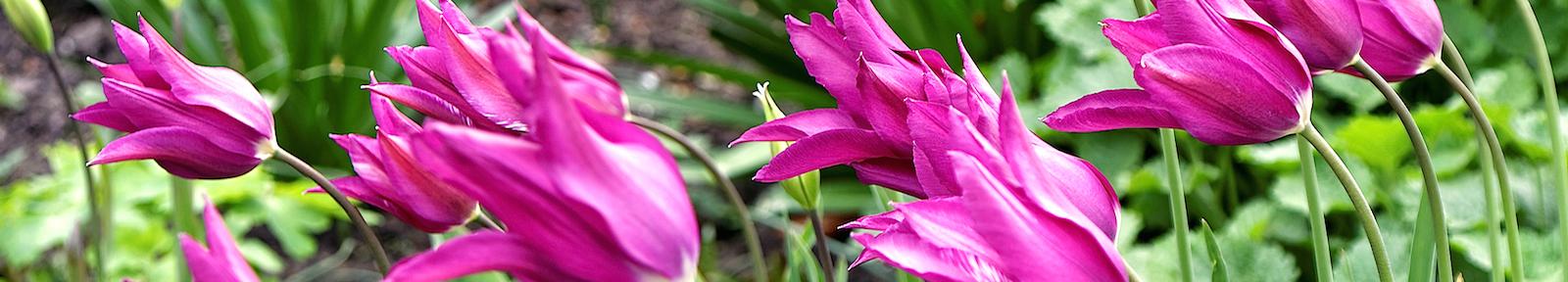 Цветы всем ветхозаветным святым Божиим.