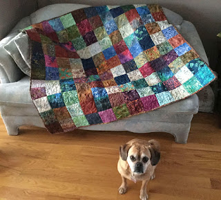 Chevy (dog) posing in front of Batik Lap Quilt 2