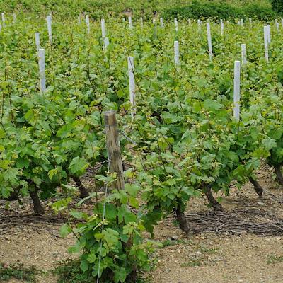 vente domaine viticole beaujolais