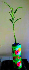 Picture of Straight Lucky Bamboo
