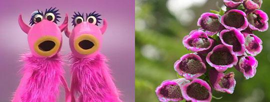 photography, flowers, muppets, mah na ma nah,