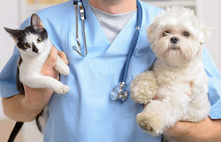 Care of Your Pet's Health | How to Keep Your Dog or Cat Healthy & Happy