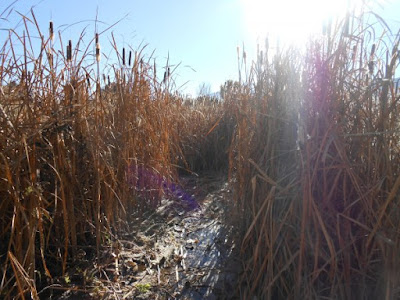 fall photography, autumn picture, cattails, river, sunlight, spiritual nature, nature