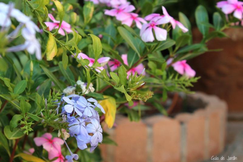 Ideas y consejos para tener una terraza llena de flores durante el ...