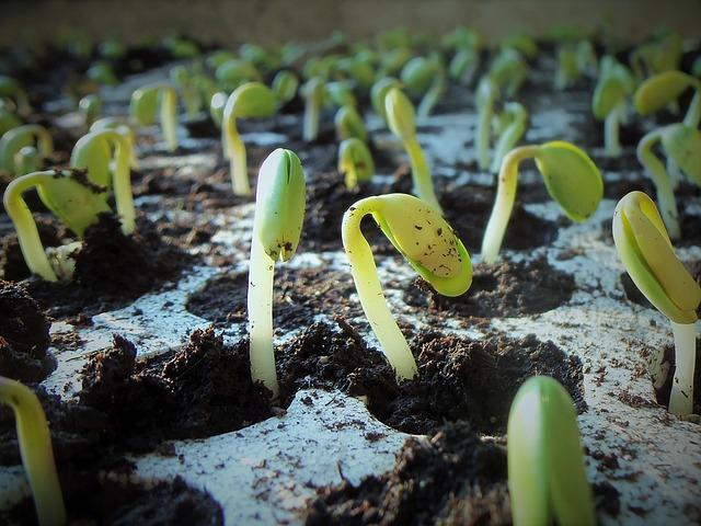 Vidéo sur la germination des graines