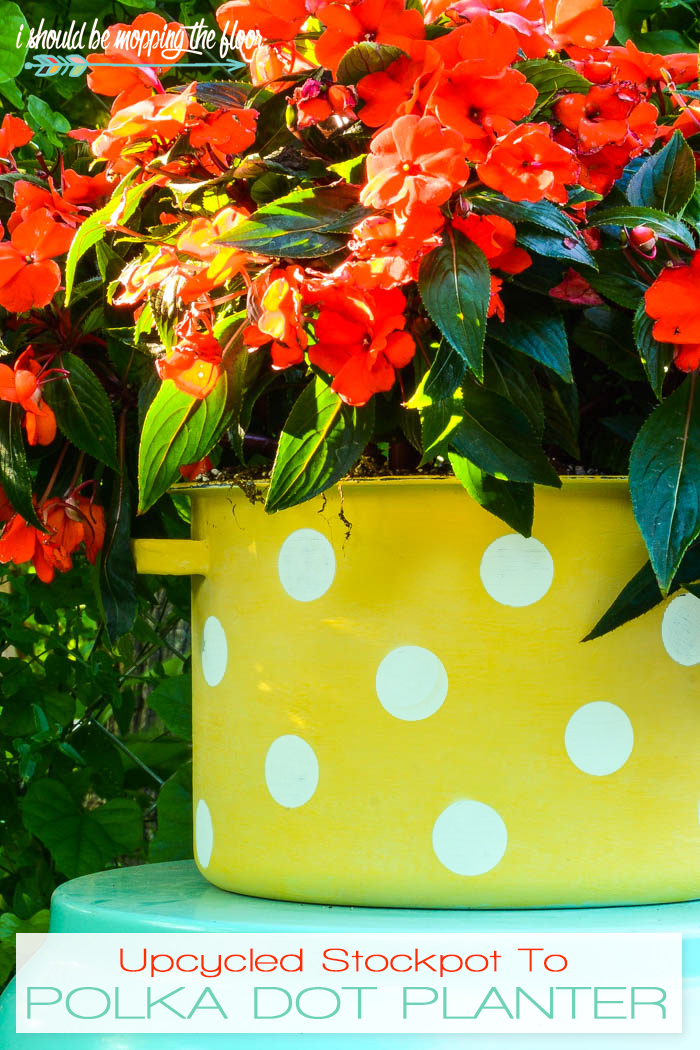 Upcycled Stockpot to Planter | Transform an old stockpot into a fun polka dot planter with these simple paint techniques.