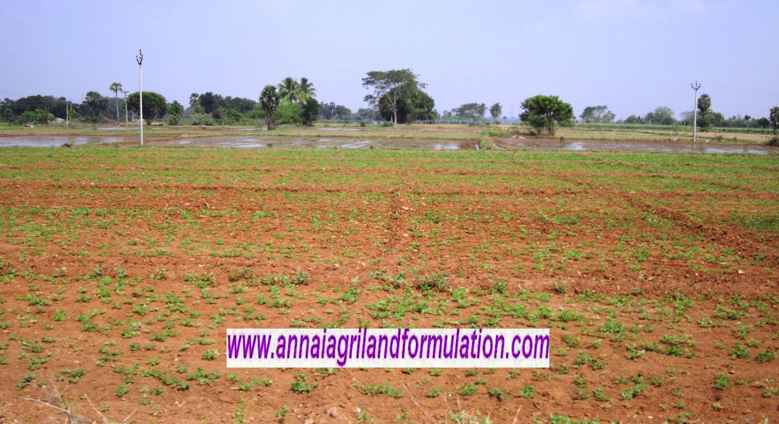 agriculture land sale in tamilnadu cheap agricultural land