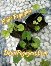 Bibit Pegagan