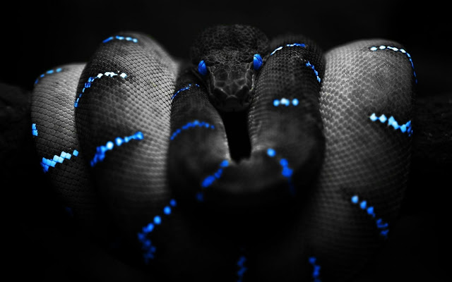 hd black snake wallpaper | HD Wallpapers, HD Pictures, Only