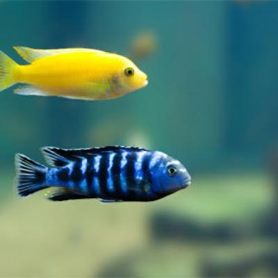 ได้ปลาผิดตัว