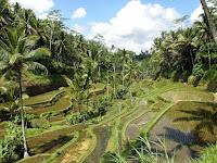 Kenali Keindahan Alam Bali dengan Ubud Bike Tour