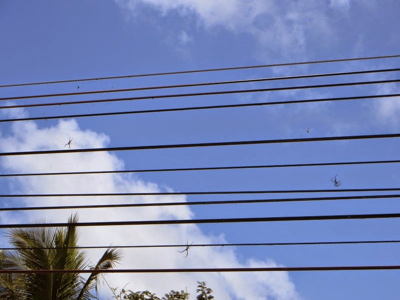 Пауки на проводах Таиланд
