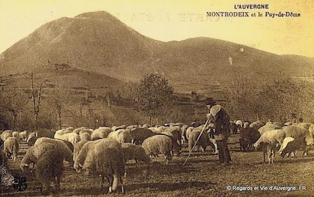 CPA Berger Auvergnat et ses moutons