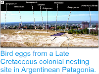 https://sciencythoughts.blogspot.com/2015/01/bird-eggs-from-late-cretaceous-colonial.html
