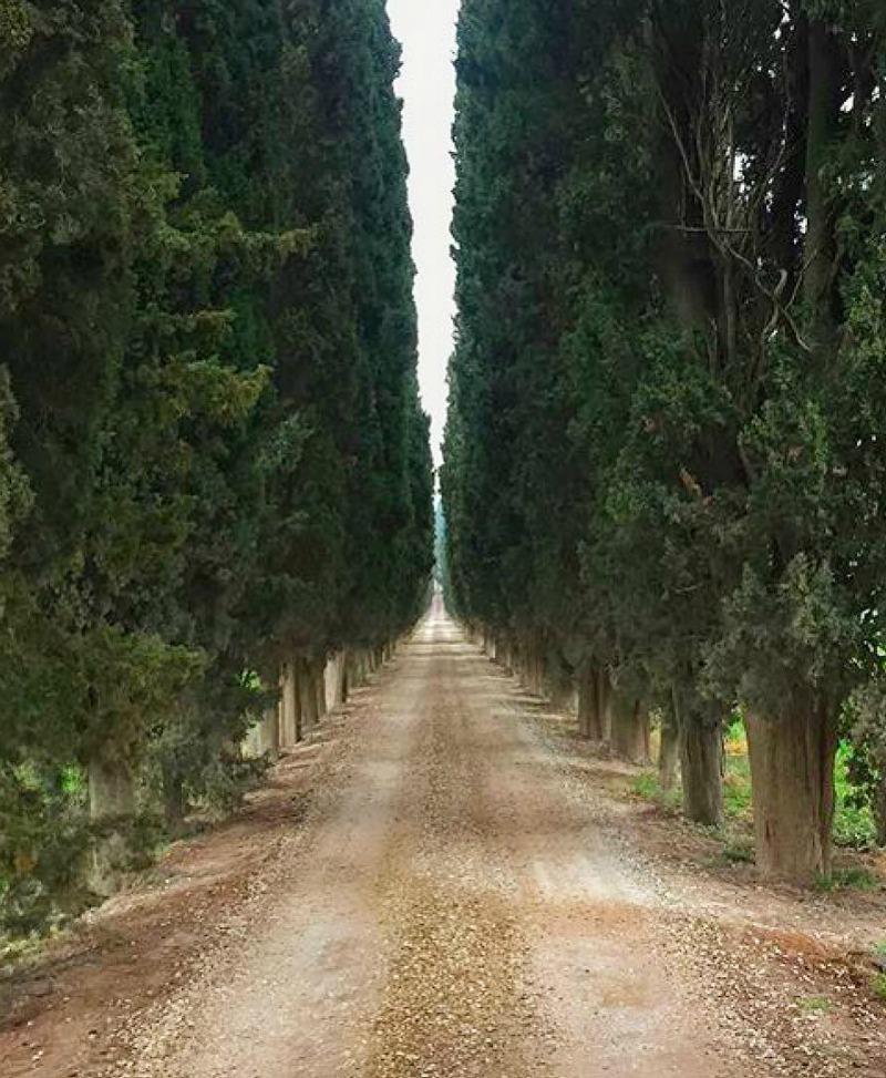 Camino con cipreses