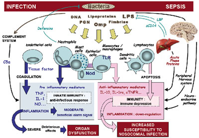 septic shock | understanding and definition of the septic shock, Skeleton