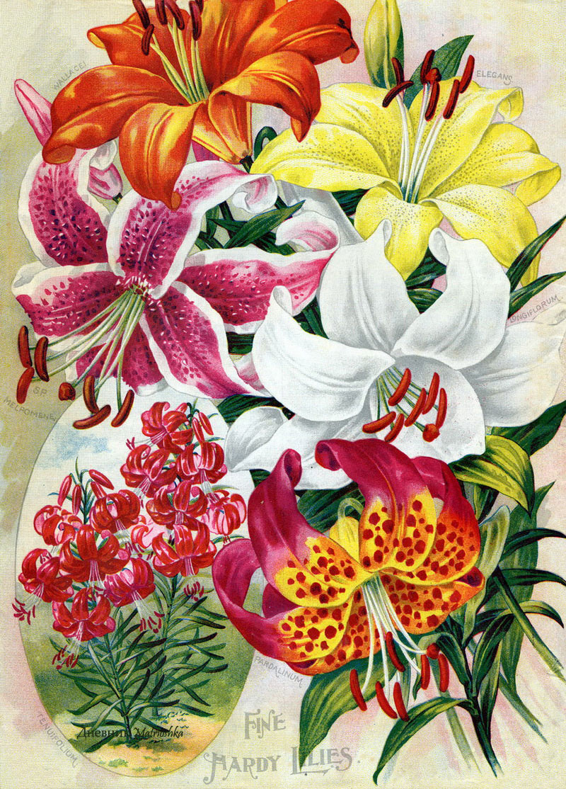 Vintage Flowers ~ Retrò Pop-art style | Tutt'Art ...