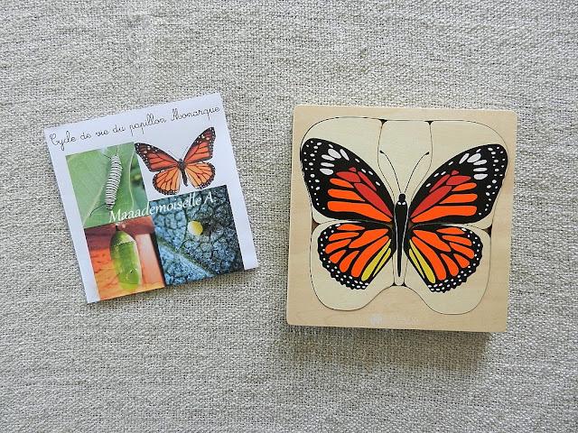|| Nos activités sur les papillons : Cartes de nomenclature et puzzle cycle de vie