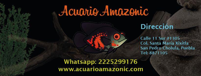 Amazonic