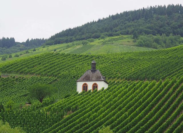 viiniviljelmät