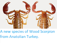 http://sciencythoughts.blogspot.co.uk/2014/05/a-new-species-of-wood-scorpion-from.html