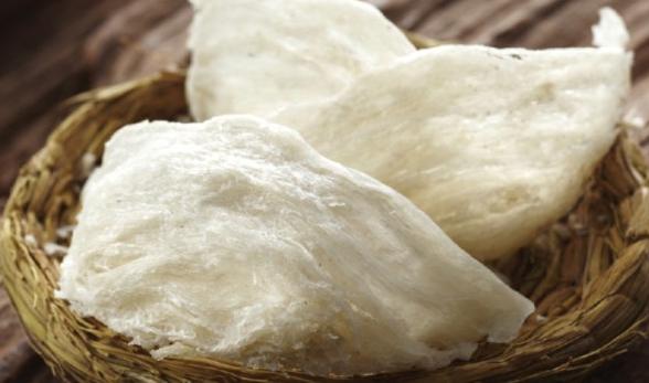 cara panen sarang walet
