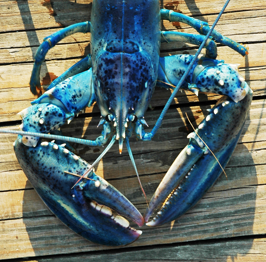 fancy lobster presentation - 900×886