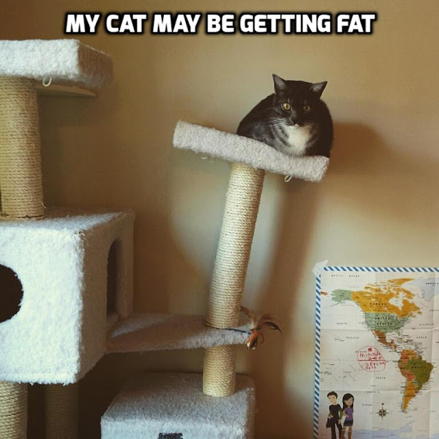 Funny Cat Getting Fat Meme Picture